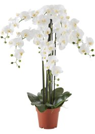 Orchidea artificiale XXL, bpc living, Bianco