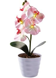 Orchidea con LED in vaso, bpc living, Rosa