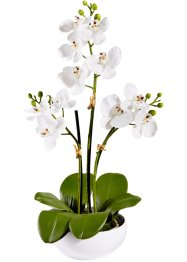 Orchidea artificiale, bpc living, Bianco