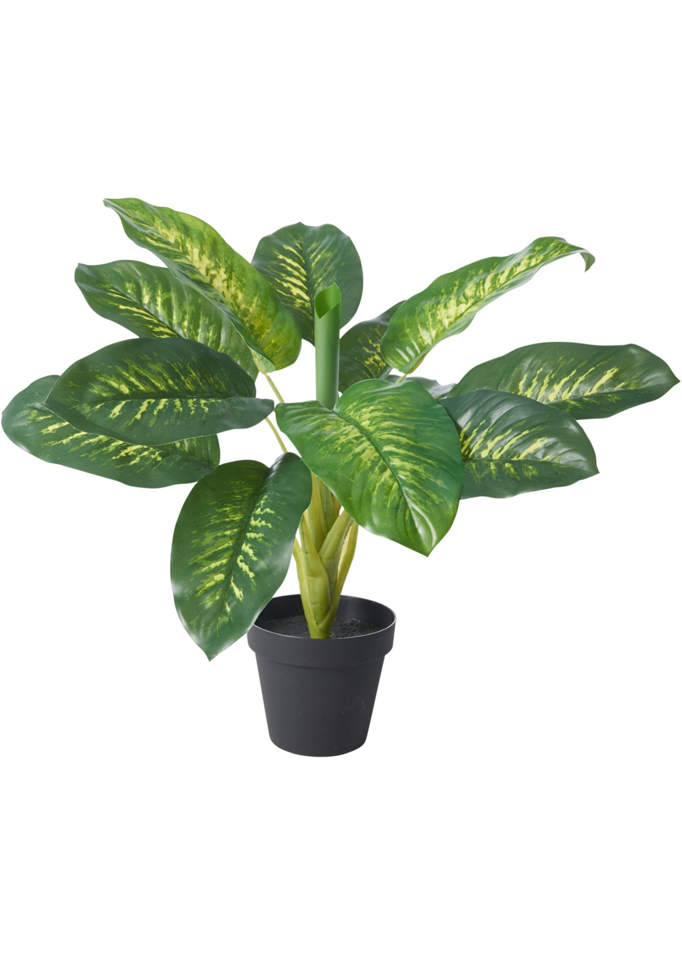 Dieffenbachia artificiale (Verde) - bpc living bonprix collection