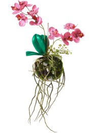 Orchidea artificiale kokedama, bpc living