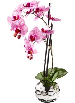 Orchidea artificiale, bpc living