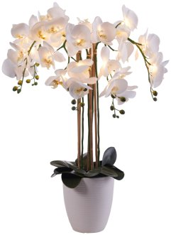 Orchidea artificiale con LED, bpc living bonprix collection